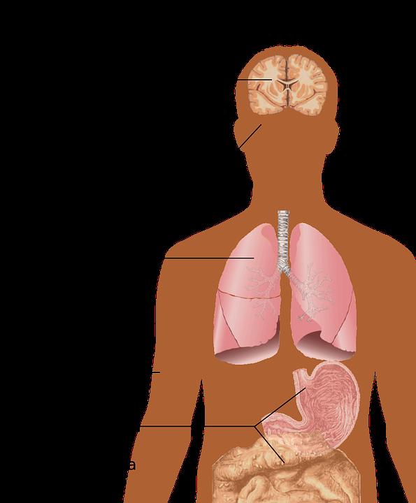 hiv 1280515 960 720 - Das sind die tödlichsten übertragbaren Krankheiten.